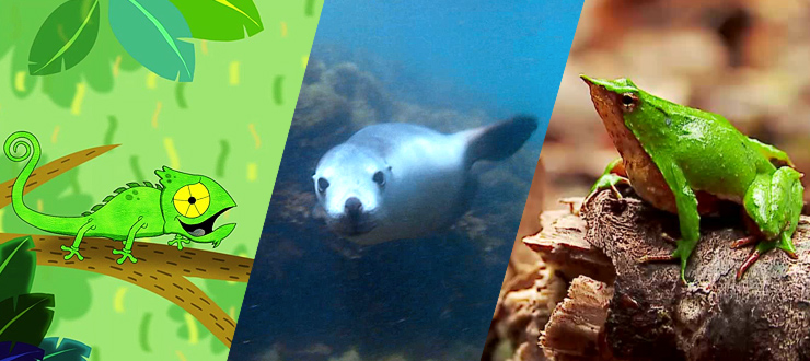 10 increíbles hechos sobre animales que te sorprenderán ¿Los conocías?